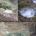 L'alta Valle dei Sele come non l'avete mai vista: le mofete