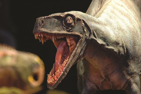 Dinosauri Giganti dall'Argentina in mostra a Padova – FOTOGALLERY