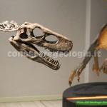 Dinosauri in mostra a Padova – FOTOGALLERY CONOSCEREGEOLOGIA