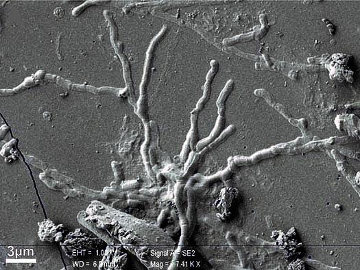 Eruzione che nel 79 d.C., la ricerca multidisciplinare utile anche per la valutazione del rischio vulcanico